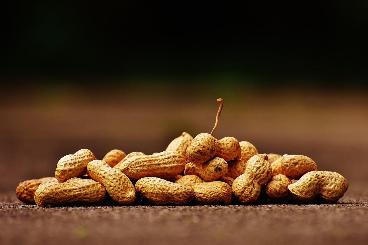 Inom tio år kan det finnas en behandlingsmetod som gör jordnötsallergiker symtomfria.
